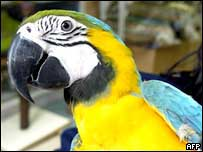 Charlie, a blue and yellow macaw, is spending his twilight years (at 104 years old!) in a garden centre in Surreye. He used to live with Sir Winston Churchill in his birdie heyday.