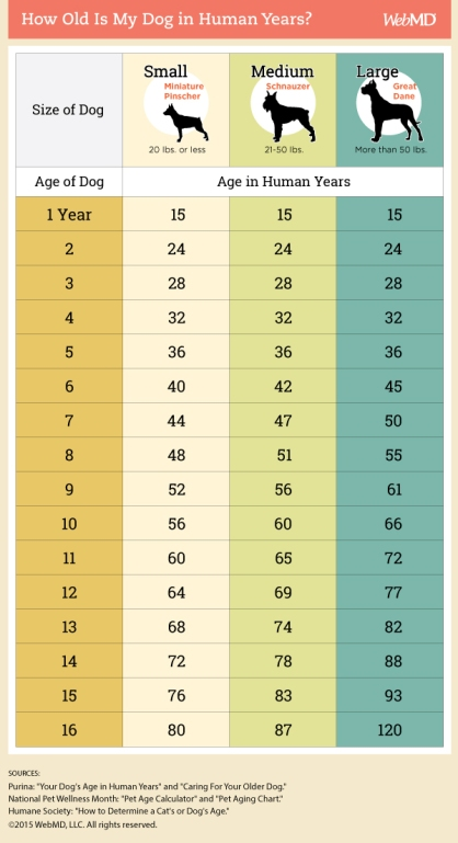 dog_age in human years