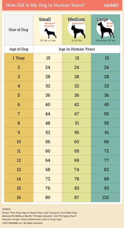 dog_age in human years