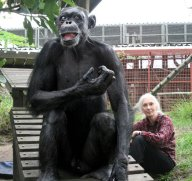 Gregoire, the oldest living chimpanzee spent