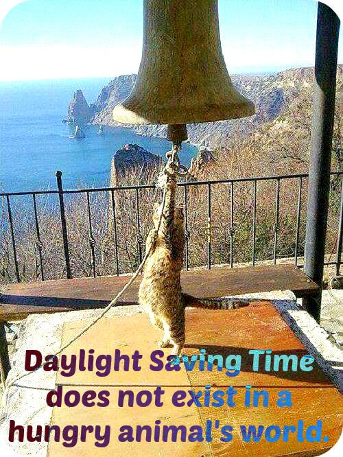 Daylight Saving TIme In Our Home