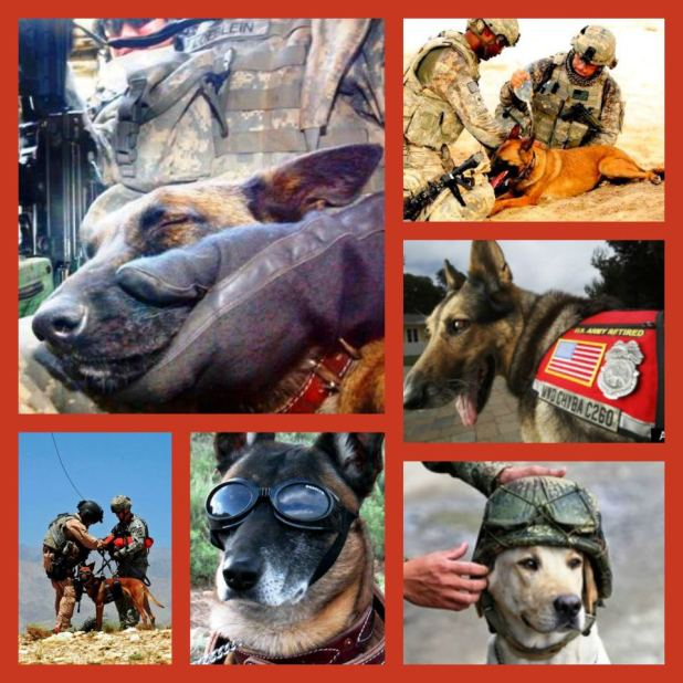 Recognition, Retirement, Care and Adoption of Military Working Dogs