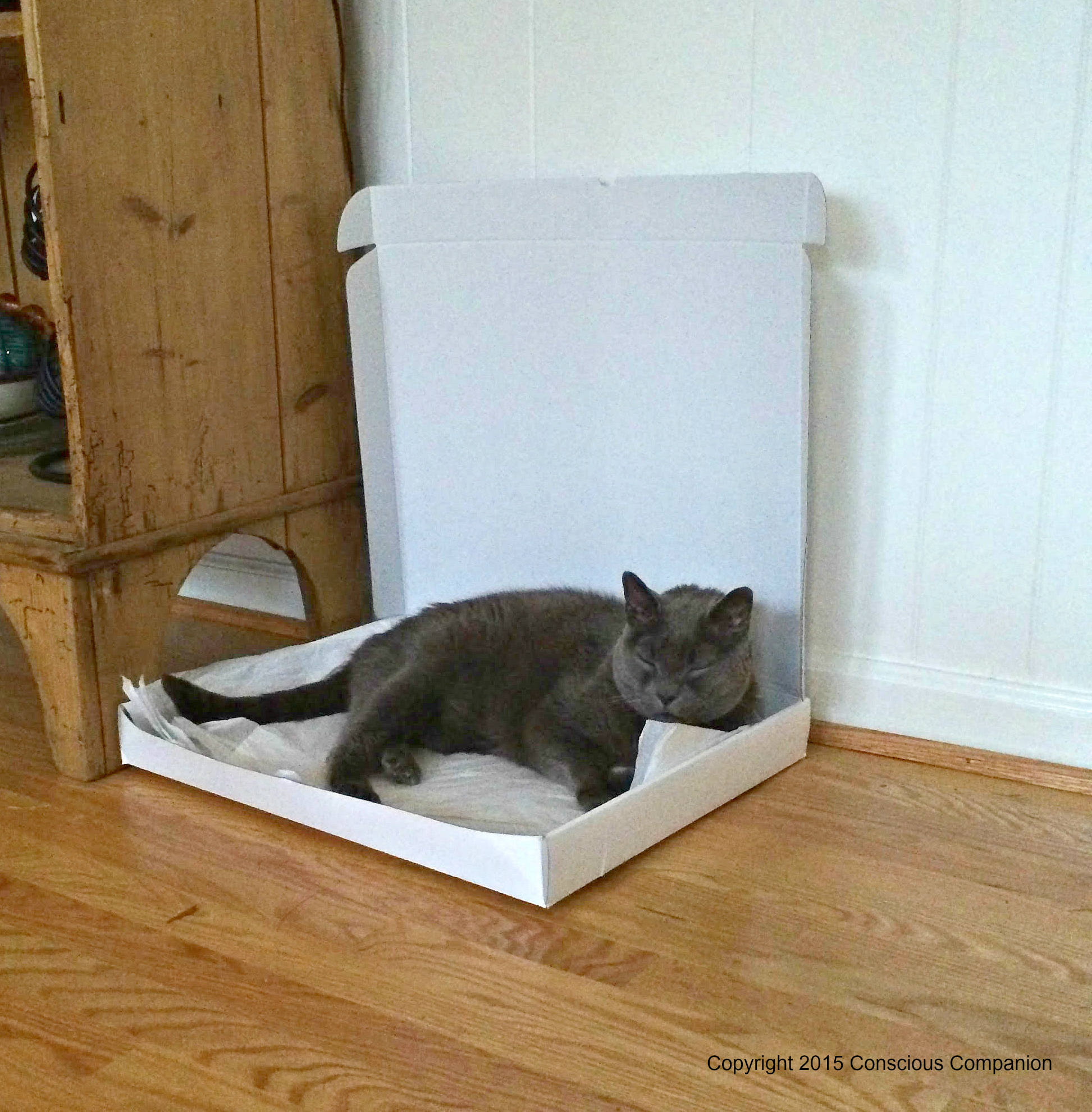 Albert_Low sided box for senior cats.jpg
