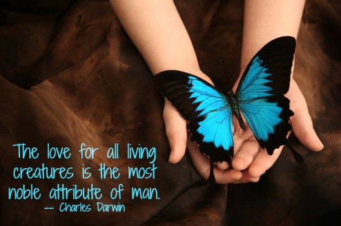 animal quotes, catherine butterfly
