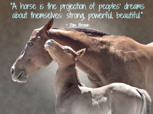 horse quotes – Conscious Companion