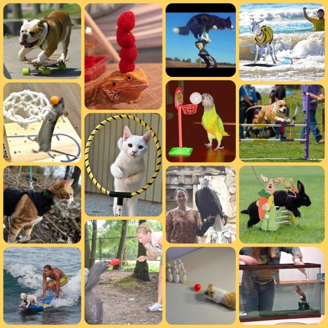 force free fun training pet tricks
