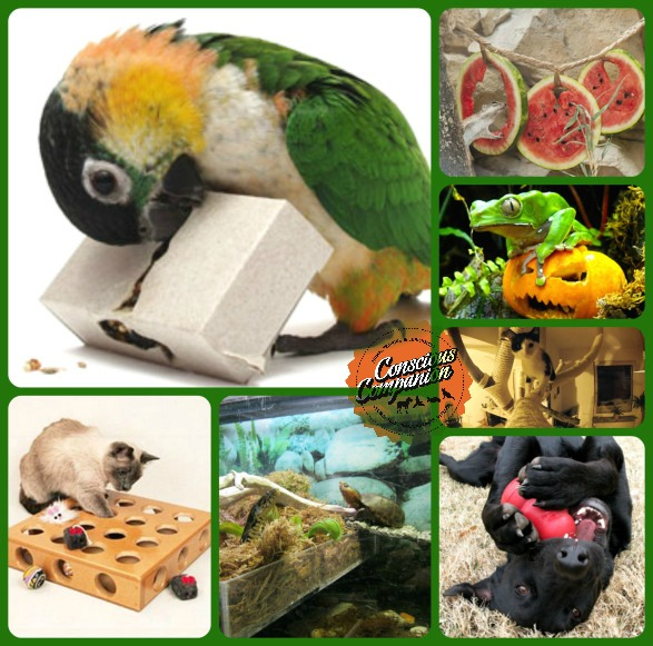 DIY pet-enrichment-puzzle-feeders_dog_cat_parrot_turtle