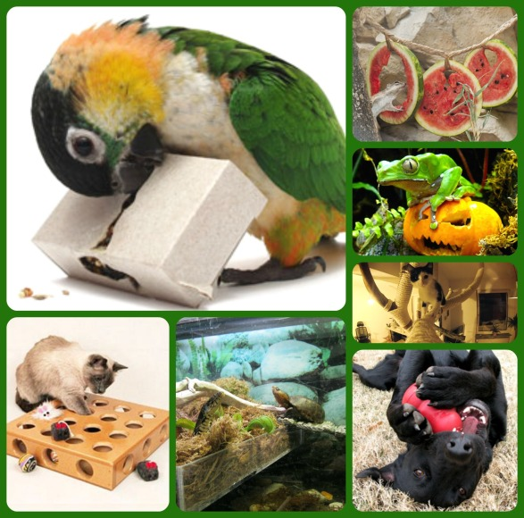 pet enrichment puzzle feeders