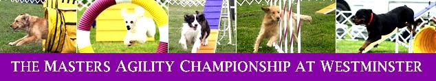 westminster dog agility  (16)