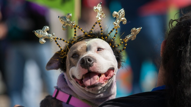 Krewe_of_Barkus_and_Meoux_Pet_Parade