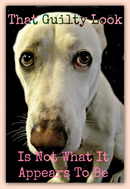 guilty dog_dog shaming