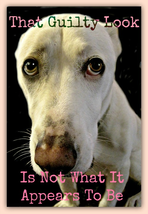 guilty dog_dog shaming