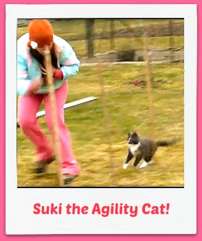 suki the agility cat