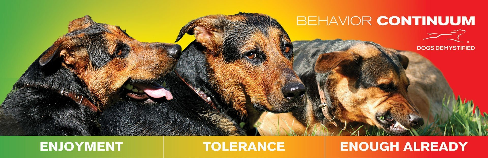 dog behavior
