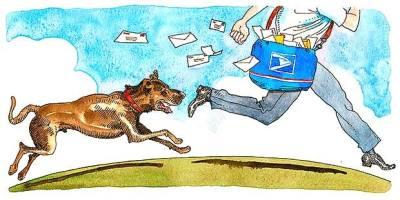 dog behavior mailman barking