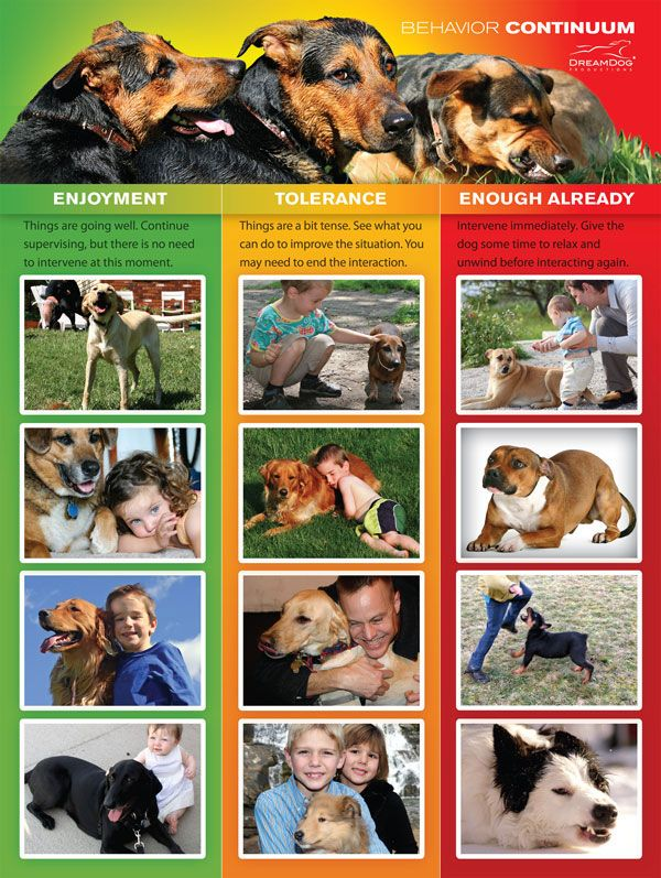 dog behavior_stress signalsjpg