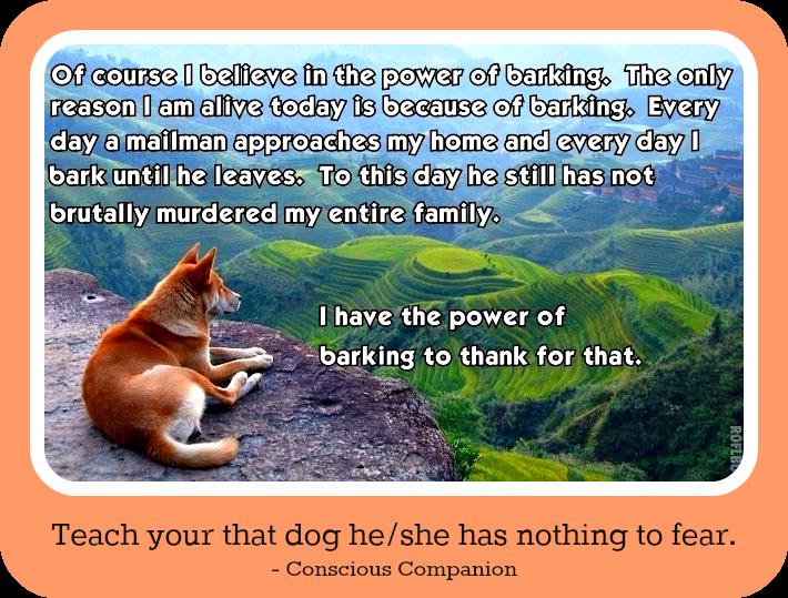 dog fears