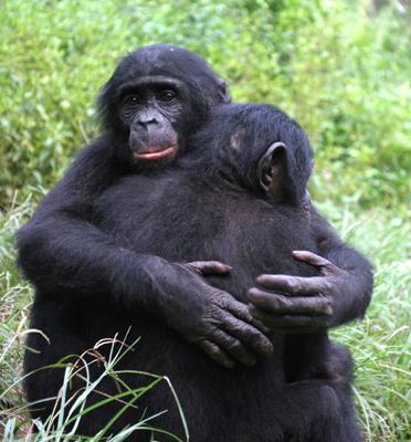 primate hug_dog hug