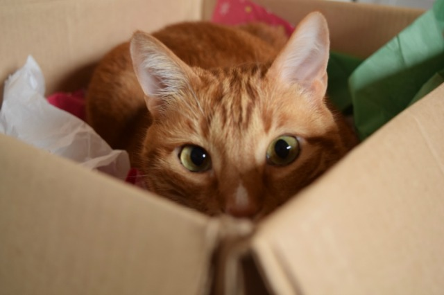 Our youngest cat, Knox, hiding in his favorite box that we refer to as