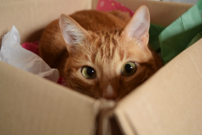 "Our youngest cat, Knox, hiding in his favorite box that we refer to as ""Fort Knox"""