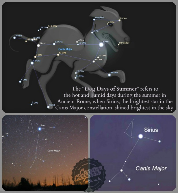 dog days of summer _Canis Major_Constellations