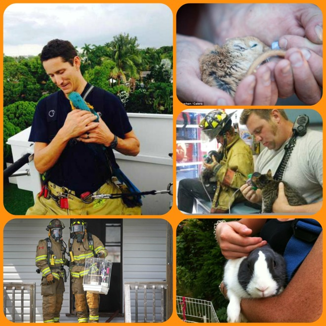 Many people have hamsters, parrots, rabbits, rats, and other companion animals. Use a window cling to help the firefighters to LOOK for them in your home!