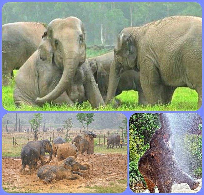 elephants happy animals rain