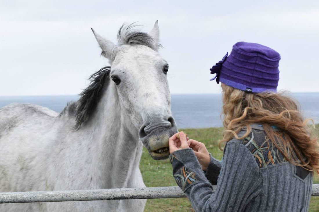 horse _Flehmen response