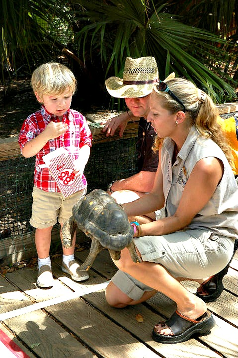 Red-footed tortoises are native to Central and South America. Here is one of our educational reptile representatives, the Red-footed tortoise
