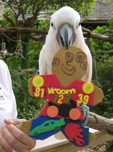 "Zazous, the rescued Moluccan cockatoo with ""Flat Stanley"" at the Audubon Zoo"