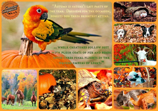 Autumn Animals fall quote