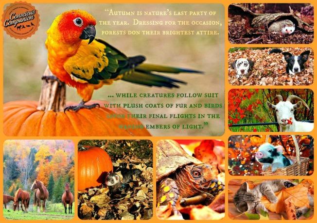 Autumn Animals fall quote
