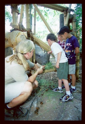 This Rhino learned through positive training that people are safe, which allowed our zoo guests to interact with her.