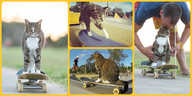 Didga the Skateboarding Cat _cat _skate board_Clicker training for cats