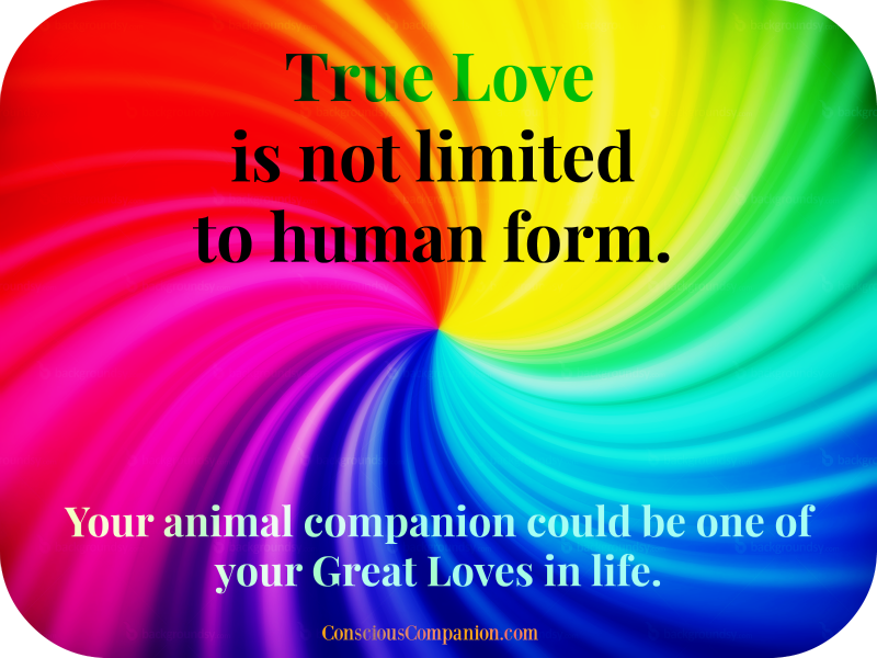 true Love_conscious companion_valentines day for pets_great loves_soul mates 2