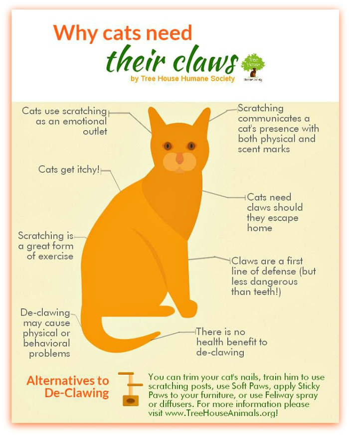 declaw_why cats need their claws