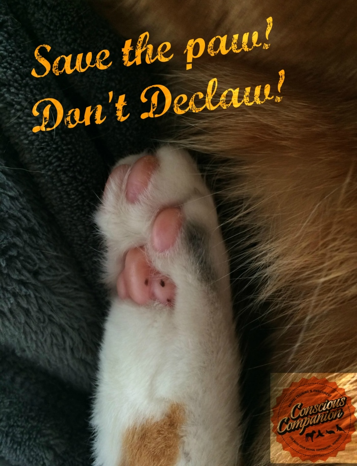 don't declaw_save the paw_Conscious Companion_Declaw awareness day