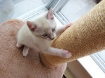 kitten-with-scratchpost