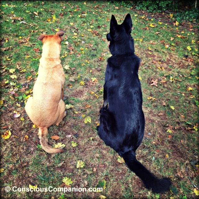 bonded dogs_oxytocin_Conscious Companion