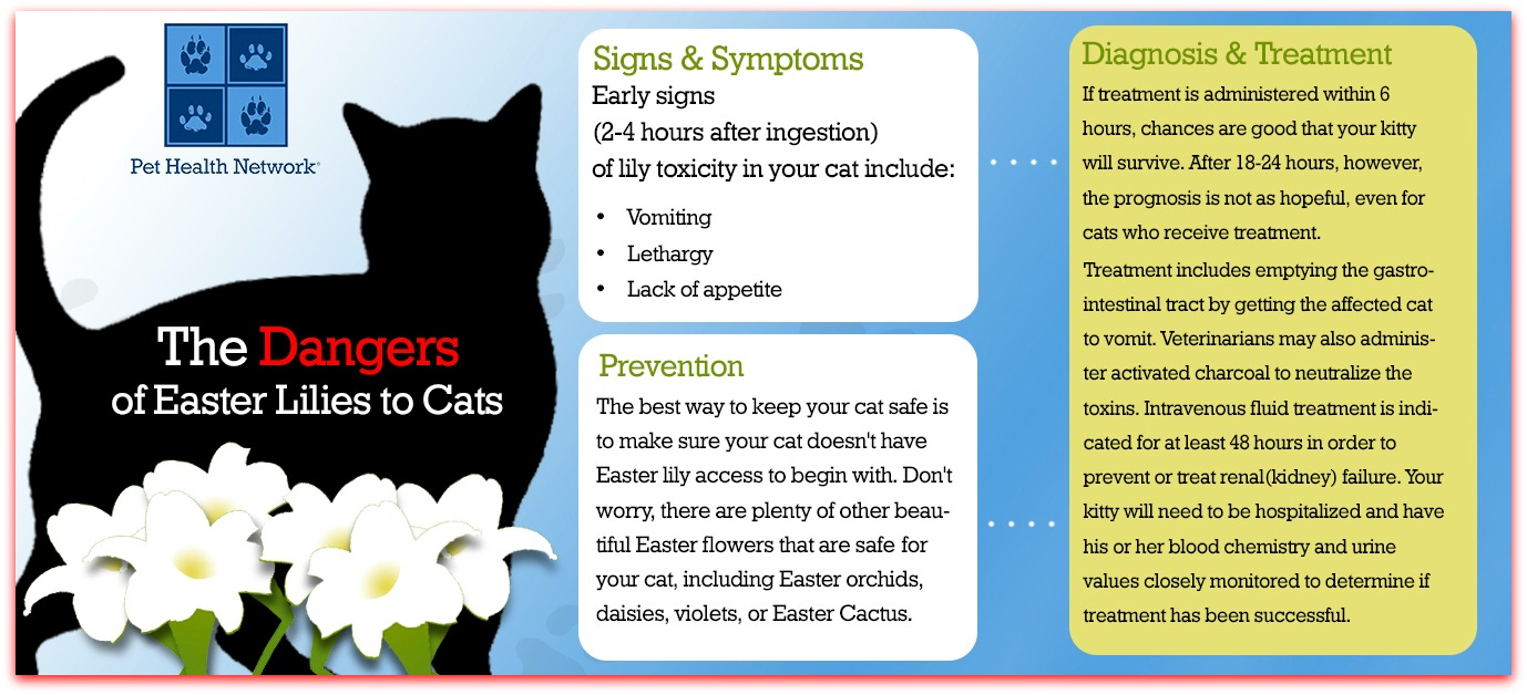 dangers of easter lilies and cats