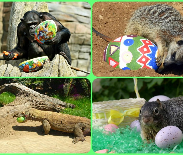 Easter Egg Hunt With Pets And Zoo Animals