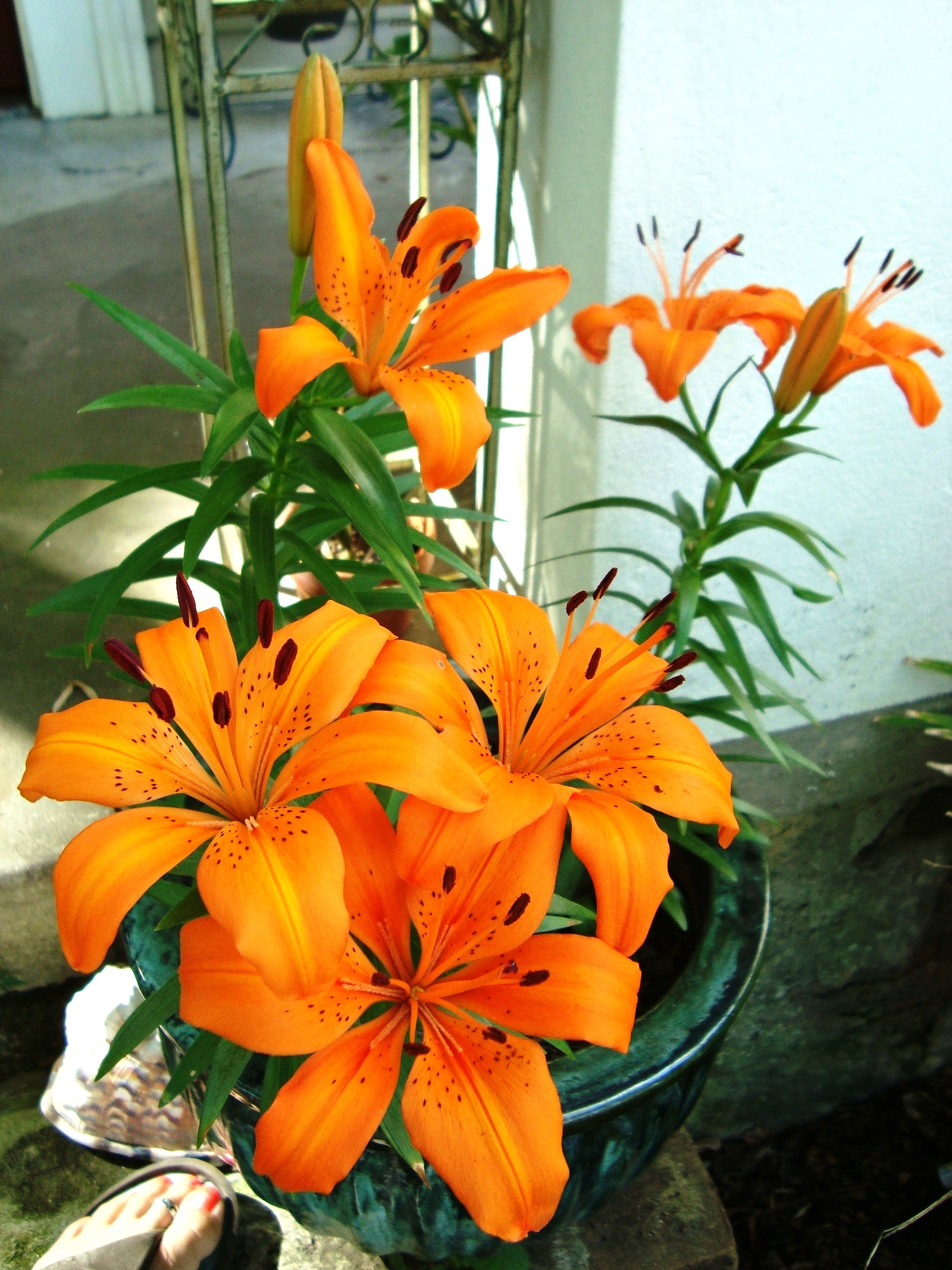 easter lilies and cats