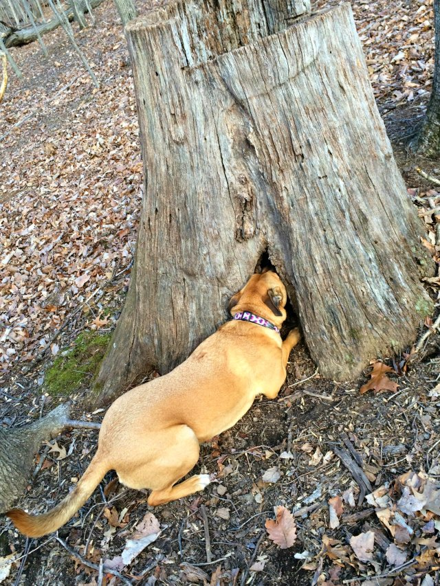 hunting squirrels dog foraging and hunting behavior