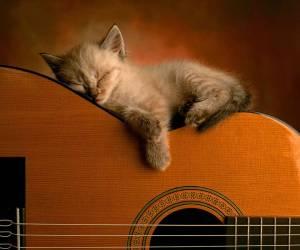 cat-music2