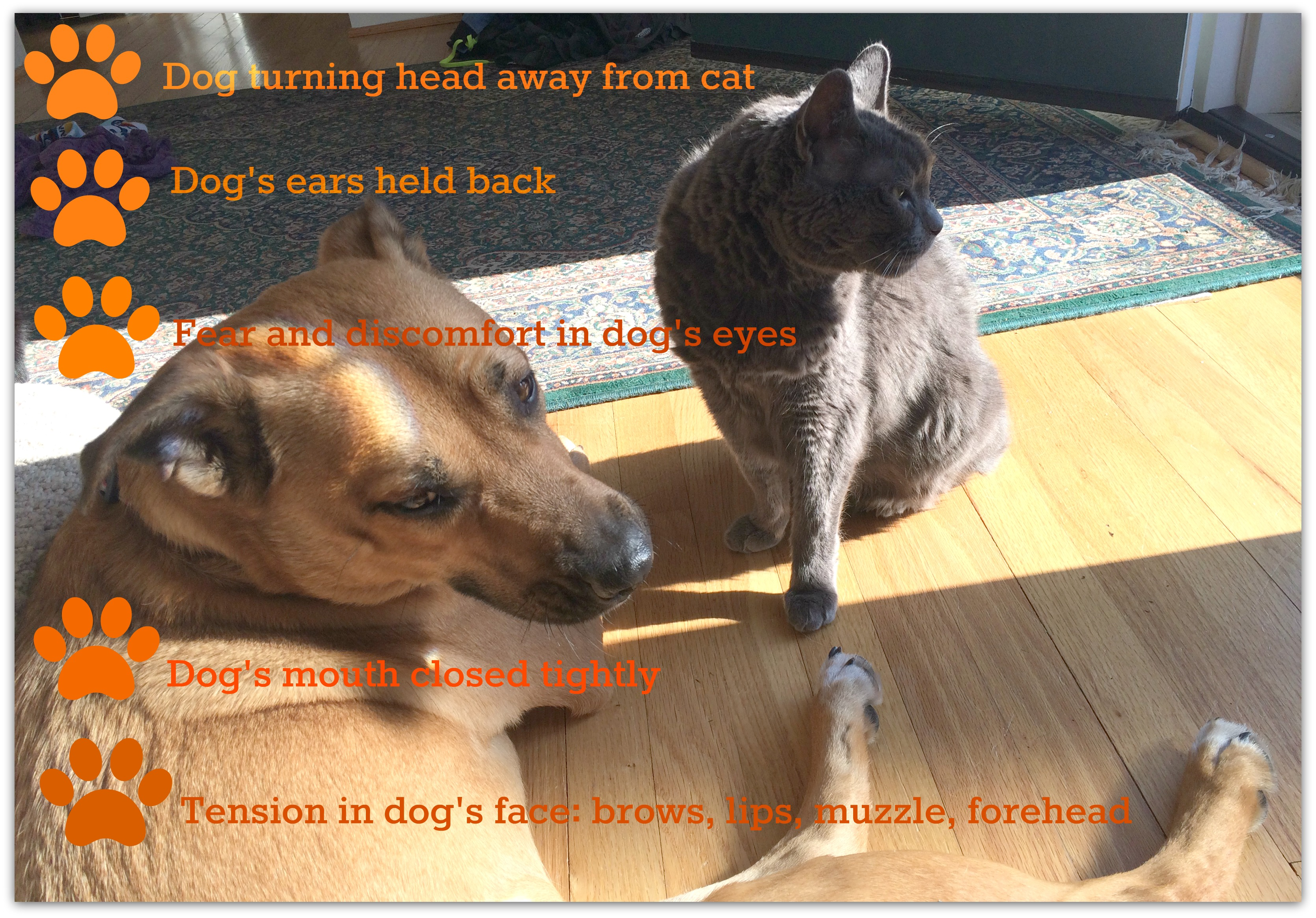 Dog behavior_dogs and cats_dog growling