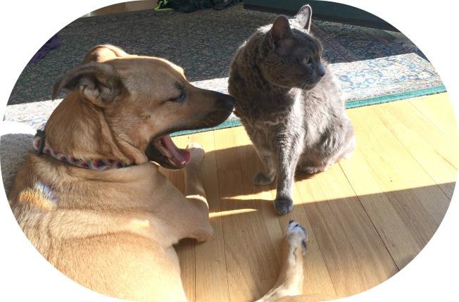 dog behavior_stress yawn_dog yawn