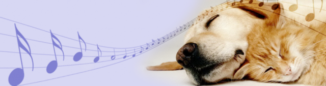 dog-cat-music-229384_870x230