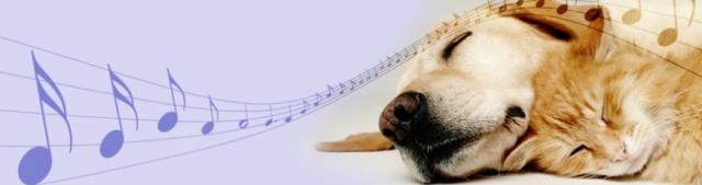 dog-cat-music-229384_870x230