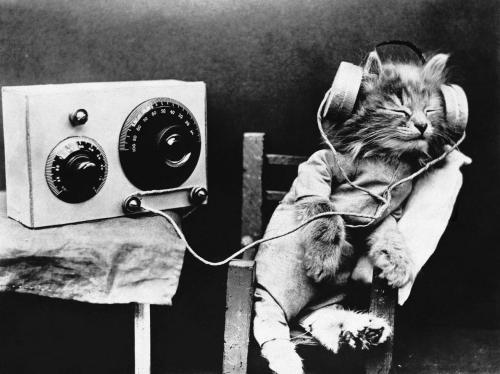 Tibby the kitten listens to a radio program on February 1, 1926.  We all know cats don't care about news, but  a new study shows that felines enjoy music that's tailored to their ears.