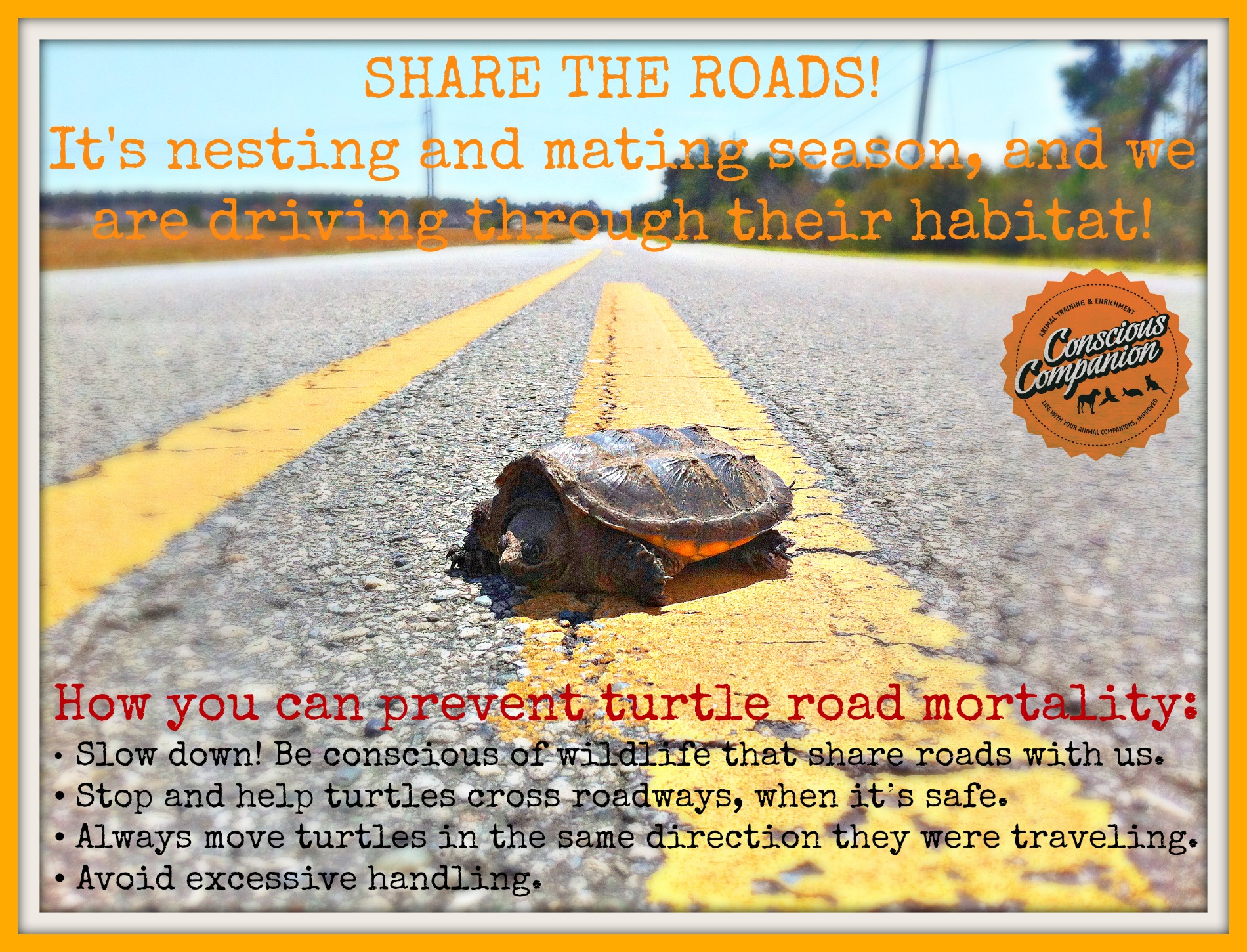 Why Did The Turtle Cross The Road Conscious Companion